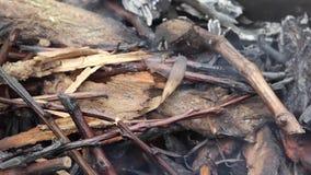 Горящие ветви Естественный процесс древесины огня горящей сток-видео