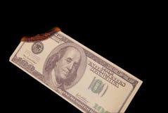 горящие доллары 100 одних Стоковые Фото