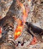 Горящие журналы и золы в костре на лесе Стоковое Изображение RF