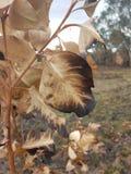 горящие листья стоковые фотографии rf