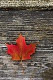 горящие листья Стоковое Изображение