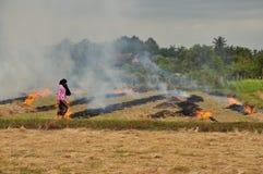 Горящие поля риса в Камбодже стоковая фотография rf