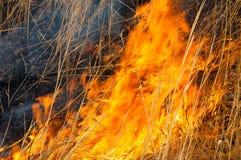 Горящие тростники пожар стоковая фотография