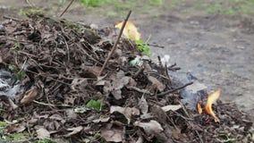 Горящий высушите листья с дымом, загрязнением окружающей среды видеоматериал