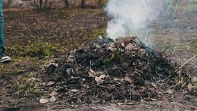 Горящий высушите листья с дымом загрязнение фото кризиса экологическое относящое к окружающей среде сток-видео