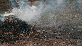 Горящий высушите листья с дымом загрязнение фото кризиса экологическое относящое к окружающей среде акции видеоматериалы