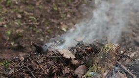 Горящий высушите листья с дымом загрязнение фото кризиса экологическое относящое к окружающей среде видеоматериал