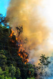 Горящий лес около силовых кабелей Стоковые Фотографии RF