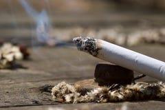 горящий конец сигареты outdoors вверх стоковые фотографии rf