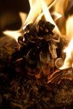 Горящий конус ели Стоковое фото RF