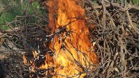Горящий огонь пылает деталь акции видеоматериалы