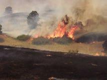 горящий bush Стоковая Фотография RF