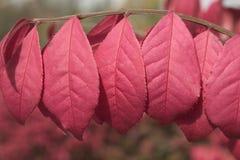 горящий bush Стоковые Фотографии RF