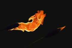 Горящий Cattail Стоковое Изображение