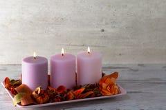 3 горящих свечи на стойке с сухими декоративными цветками и расшивой Стоковое фото RF