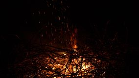Горя костер на черной предпосылке окруженной ветвями r видеоматериал