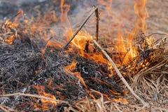 Горя лесной пожар и дым сухой травы весной разрушают всю жизнь стоковые изображения rf