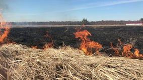 Горя сухая трава весной на поле видеоматериал