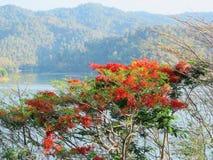 гордость Барбадосских островов стоковые изображения rf