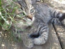 Гордый котенок Стоковое Фото