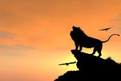 Гордый мужской лев на скалистой скале на заходе солнца Стоковое Изображение RF
