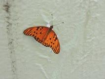 Гостиница бабочки на белой предпосылке Стоковое Фото