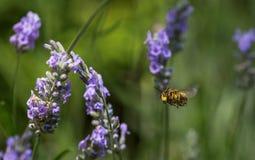 Гостиница летания оси летания сад Стоковая Фотография