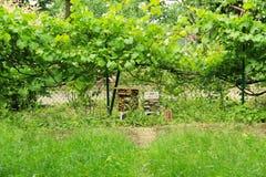 Гостиница насекомого в саде Стоковое фото RF
