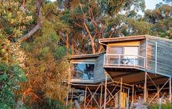 Гостиничные номера среди верхних частей дерева в Австралии стоковая фотография rf