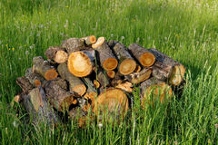 Готовая древесина Стоковая Фотография RF