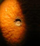 гофрированная кожура детали померанцовая Стоковая Фотография RF