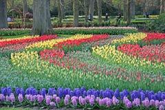 Голландия, Keukenhof стоковое изображение