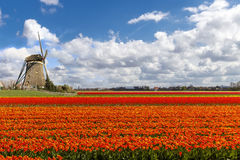 голландская ветрянка тюльпана ландшафта Стоковые Изображения