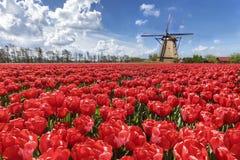 голландская ветрянка тюльпана ландшафта стоковая фотография