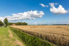 Голландская обрабатываемая земля с пшеничным полем и cloudscape Стоковые Фото