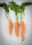 Голландские сладостные моркови на мраморе Стоковое Изображение