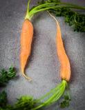 Голландские сладостные моркови Стоковая Фотография RF