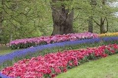 голландские цветки Стоковое Изображение RF