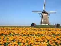 Голландский ландшафт ветрянки тюльпана стоковые изображения rf