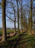 голландский ландшафт стоковые изображения rf
