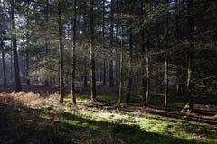 Голландский лес в осени на солнечный день с голубым небом и красивым солнцем излучает Стоковое фото RF