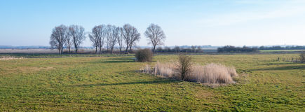 Голландский сельский ландшафт с строкой чуть-чуть деревьев Стоковая Фотография RF