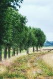 Голландский сельский ландшафт Стоковые Фото