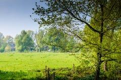 голландский лужок Стоковая Фотография RF