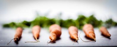 6 голландских морковей Стоковые Фото