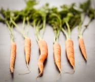 6 голландских морковей Стоковая Фотография RF