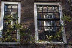 2 голландских окна с зелеными листьями с отражением Стоковая Фотография RF
