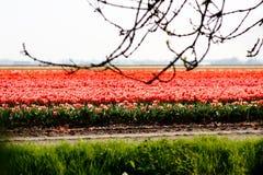 Голландское поле Стоковая Фотография RF