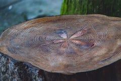 Годичное кольцо Стоковое Изображение RF