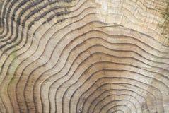 Годичные кольца дерева для предпосылки Стоковое Изображение